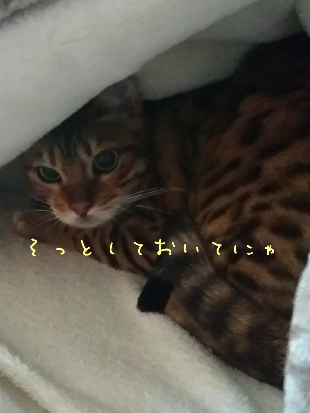 ティトちゃん