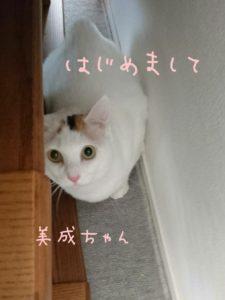 美成ちゃん