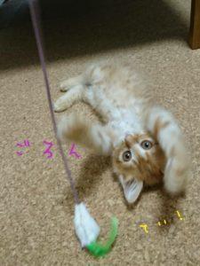 子猫ちゃん