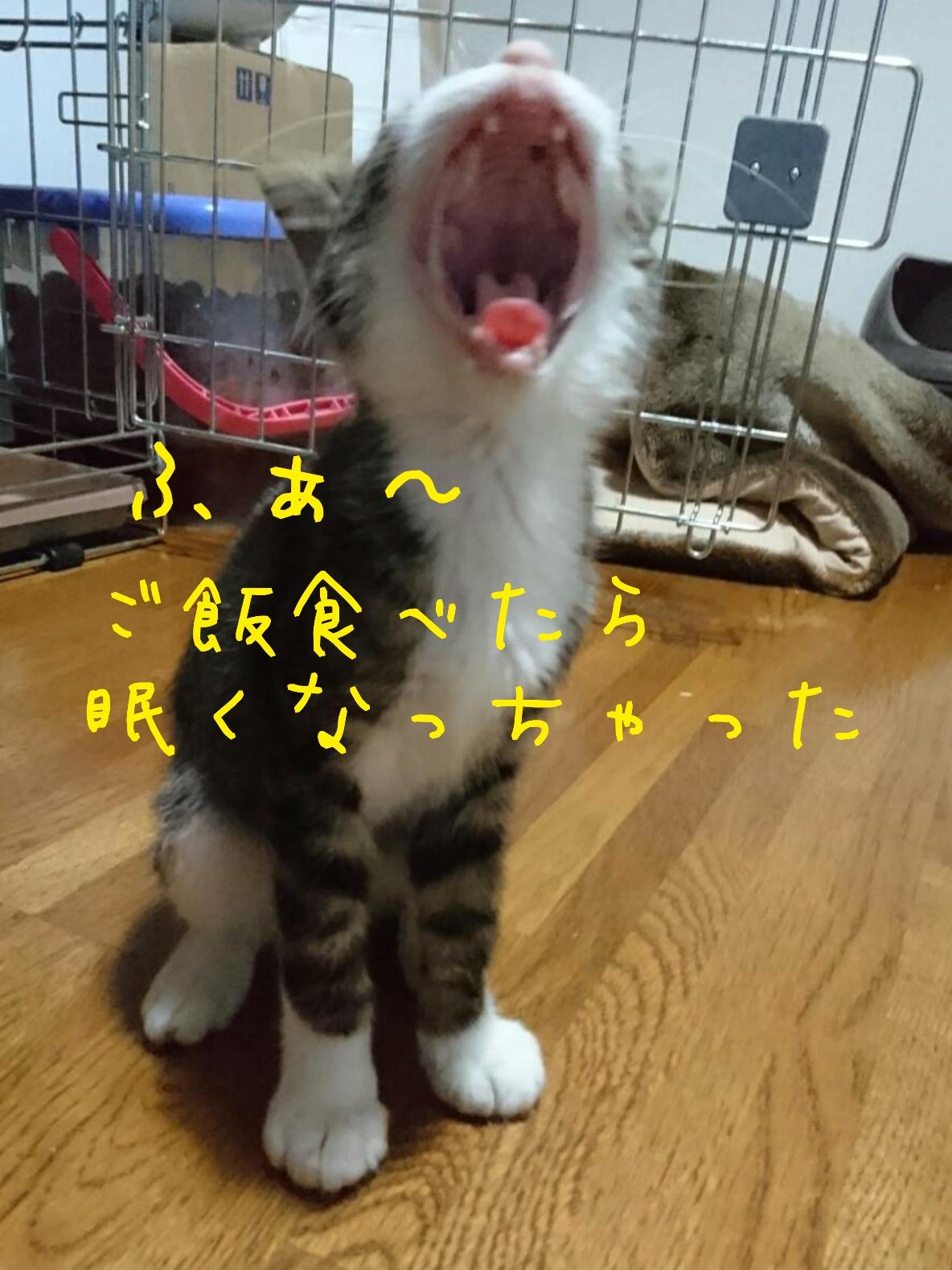 タマちゃん